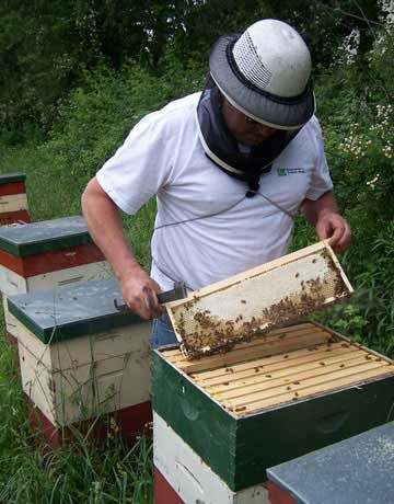 A Beekeeper In Gear Tending To Hives