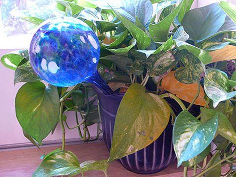 aqua globes as seen on tv