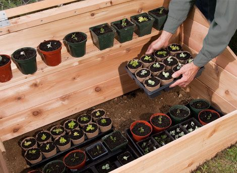How to Build a Cold Frame For Winter Gardening (With Plans!)