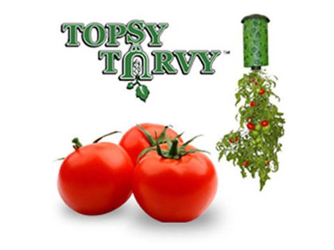 Vegan nutrition, Tomato, Whole food, Vegetable, Produce, Natural foods, Ingredient, Plum tomato, Bush tomato, Fruit,