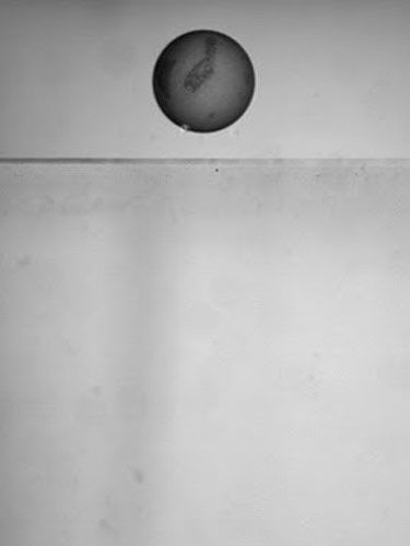 Monochrome, Circle, Sphere, Still life photography, Ball, Oval,