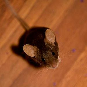 Stop Pests From Invading Your Home This Autumn - How to Keep
