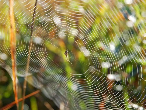 Nature, Natural environment, Spider web, Light, Natural material, Atmospheric phenomenon, Botany, Terrestrial plant, Close-up, Macro photography,