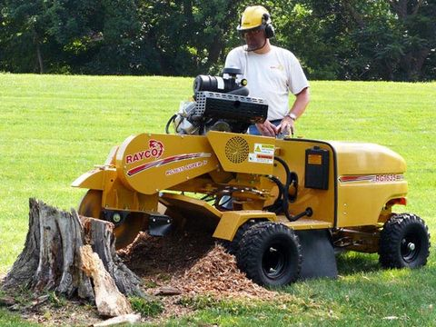 1. GRIND AWAY A STUMP