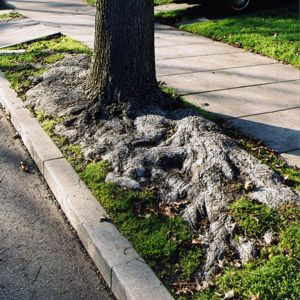How to Keep Roots From Wrecking Your Sewer Line