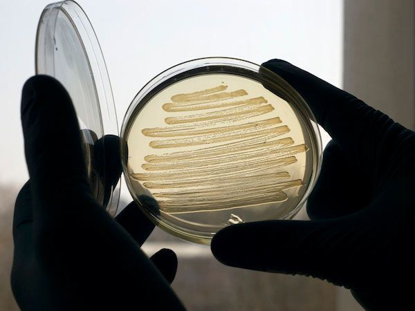 Hijacking E. Coli to Brew Synthetic Fuel