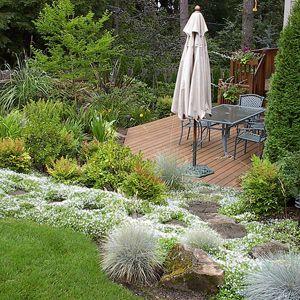 3 Ways Plants Can Help You Control Erosion