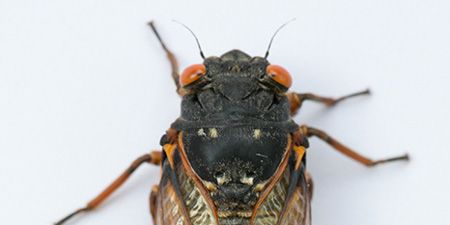 Up Close With a Cicada