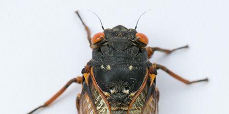 Invertebrate, Organism, Yellow, Insect, Arthropod, Pest, Amber, Beauty, Light, Grey,