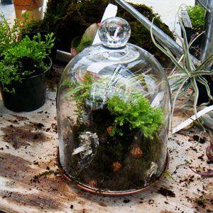 how to make moss grow between rocks