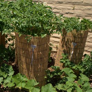 Build a Potato Tower to Save Space in your Garden