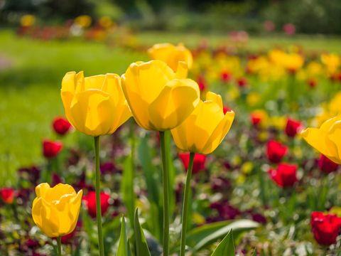 Yellow, Plant, Petal, Flower, Flowering plant, Ecoregion, Wildflower, Spring, Botany, Field,