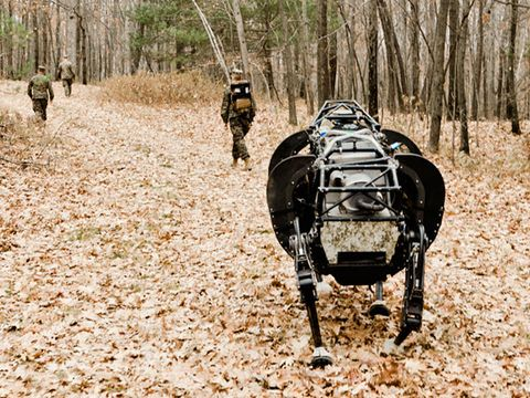 Forest, Working animal, Woodland, Terrestrial animal, Camouflage, Marines, Pack animal, Military person, Deciduous, Military uniform,
