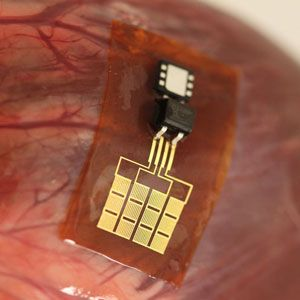 How Your Internal Organs Could Power Implanted Devices