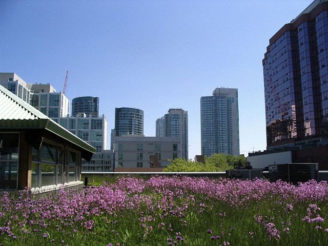 Cool Roofs Can Counteract the Warming of Urban Sprawl