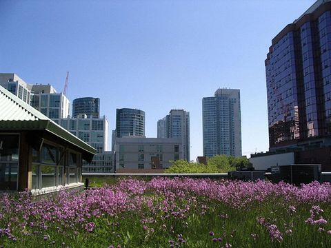 Green roof at Mountain Equipment Coop, Toronto, Canada.