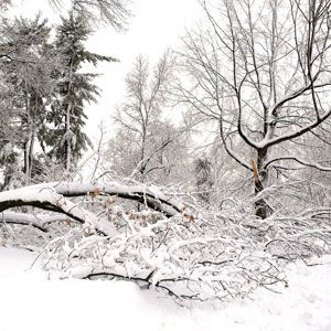 6 Things You Need to Know About Dealing With Downed Tree Limbs