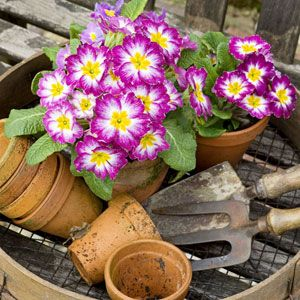 5 Tips For Spring Gardening Success