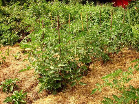 Plant community, Shrub, Soil, Groundcover, Subshrub, Annual plant, Herbaceous plant, Herb, Plantation, Perennial plant,