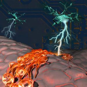 Study: Electrical Signals Can Regrow Brain Cells