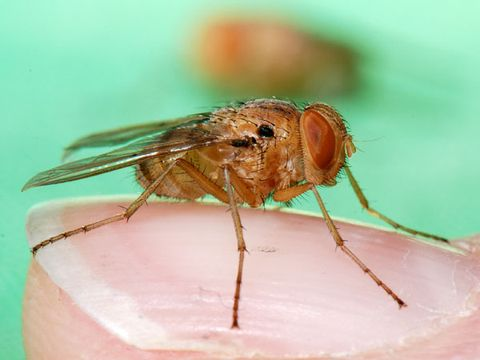 Invertebrate, Organism, Skin, Arthropod, Pest, Insect, Organ, Macro photography, Close-up, Parasite,