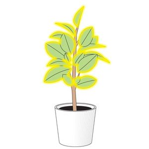 How to Make a Plant Glow