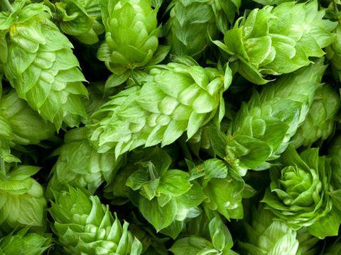 Green, Leaf, Ingredient, Groundcover, Herb, Fines herbes, Leaf vegetable, Annual plant, Whole food,