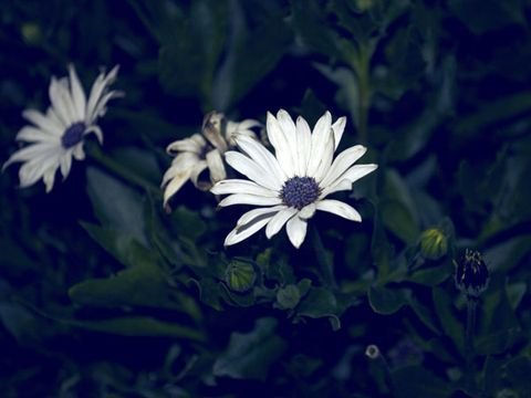 Flowers By Moonlight