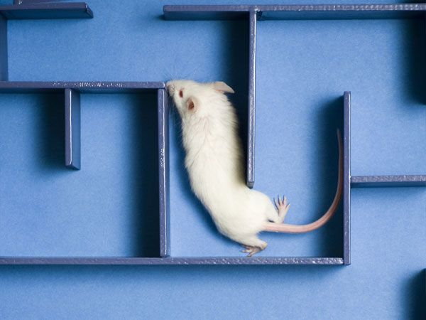 If You Give a Mouse a Human Speech Gene, It Learns Faster