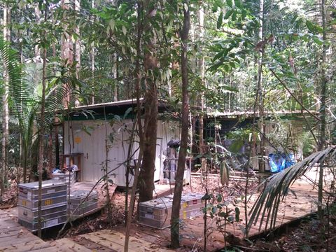 Property, Tree, Woody plant, Forest, Terrestrial plant, Shack, Door, Jungle, Trunk, Woodland,