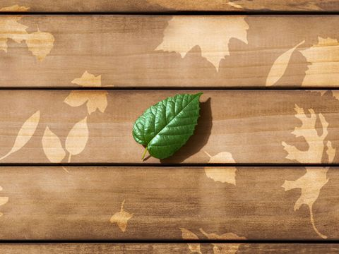 Leaf, Green, Wood, Wall, Brown, Beige, Plant, Photography, Rectangle, Hardwood,