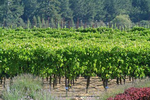 Agriculture, Plant community, Farm, Field, Plantation, Rural area, Crop, Groundcover, Cash crop, Shrub,