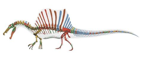 Spinosaurus, the Biggest Meat-Eating Dino Ever Discovered, Ate Entire Sharks