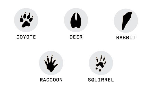 How to ID Those Animal Tracks in Your Yard