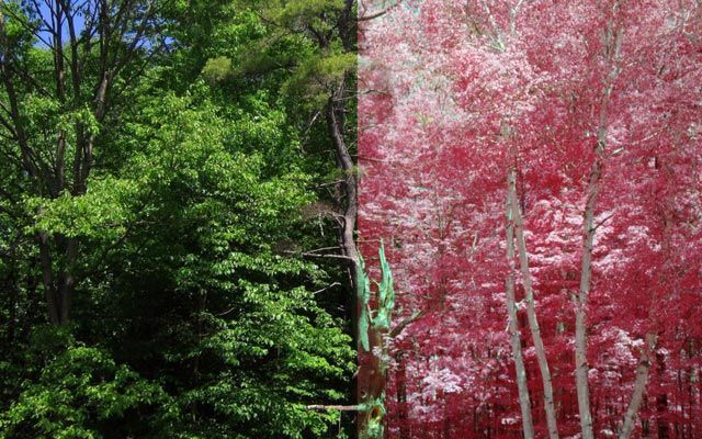 An Infrared Camera for the DIY Gardener