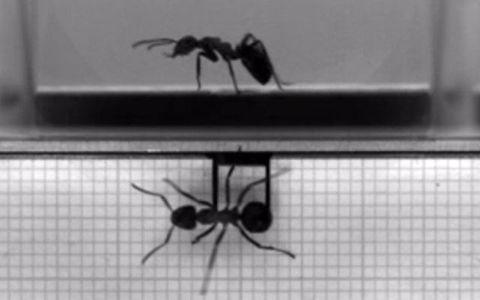 Invertebrate, Arthropod, Pest, Insect, Photograph, White, Monochrome, Line, Light, Pattern,