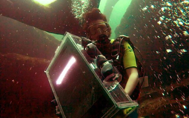 These Stunning Underwater Photos Were Taken With a Desktop Scanner