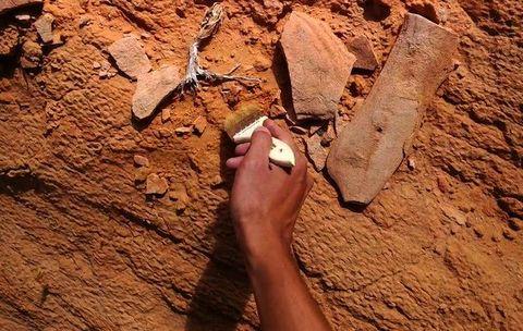 Toe, Geology, Tan, Beige, Foot, Tool, Archaeology,