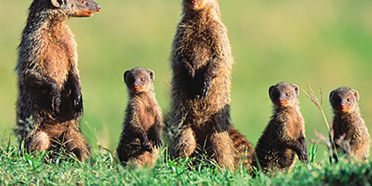 Invasive Species Animals Top 5 Most Damaging Invasive Species In