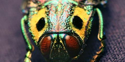 Colorfulness, Adaptation, Macro photography, Close-up, Photography, Terrestrial animal, Pest,