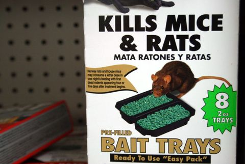 How to Get Rid of Mice | Weapons of