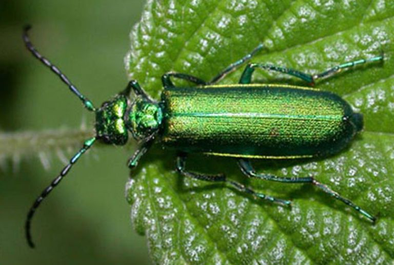 10 badass beetles and the technology they inspire beetles and