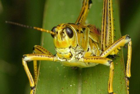 Nature, Invertebrate, Organism, Yellow, Natural environment, Insect, Arthropod, Photograph, Adaptation, Beauty,
