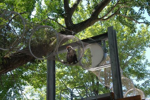 "Monkeys on the Move: ""Treetop Trail"" Lets Philadelphia Zoo Primates Go Exploring"