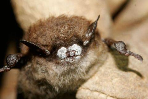 Brown, Organism, Invertebrate, Arthropod, Bat, Terrestrial animal, World, Beige, Pest, Liver,