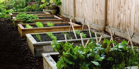 for the experienced gardener or the novice raised garden beds take the hassle out of here are tips on planning building protecting and