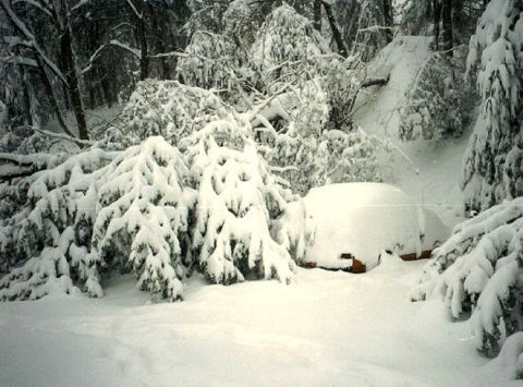 car and felled tree blanketed in snow
