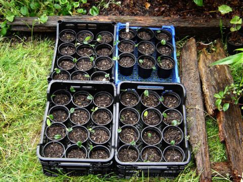 Prepare Your Seedlings for the Harsh Outdoors