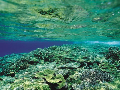 Corals and Algae