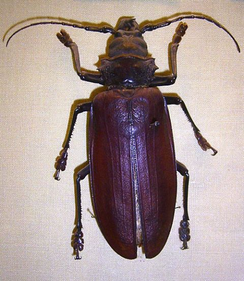 Invertebrate, Organism, Insect, Arthropod, Beetle, Amber, Beauty, Purple, Bronze, Violet,